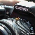 Po drabinie z asekuracją #pająk #canon #pajęczyna