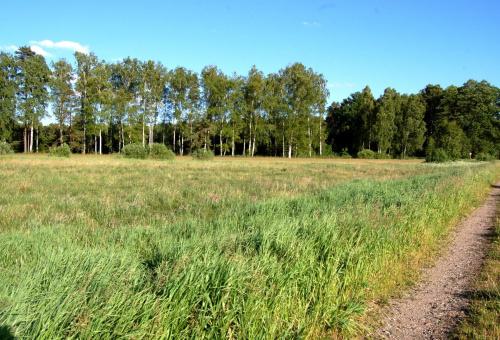 Leśna łąka.