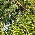 #drzewo #gałązki #igły #ciepła #zima #blisko #lata