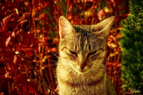 ..dla Saule jesienny kot