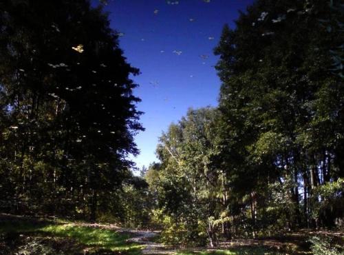 Dokąd biegnie ta napisana sarna przez napisany las? Czy z napisanej wody pić?