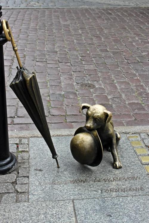 Toruń- pies Filuś